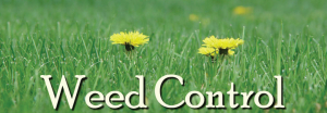 Herbicides, Insecticides & Weed Control Products